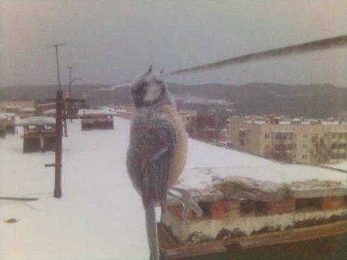 Pássaro Congelado