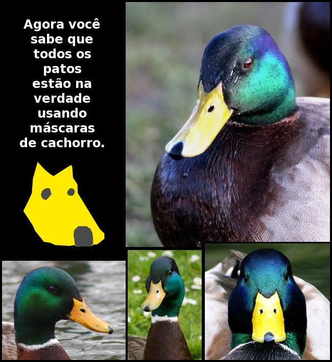 http://eupodiatamatando.com/wp-content/uploads/2010/08/pato_mascara_cachorro.jpg
